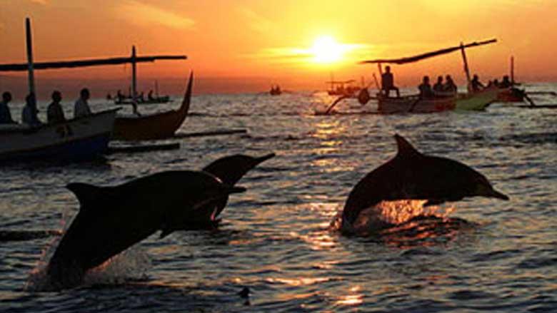 Dolphin-wild